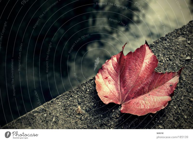Water Loneliness Leaf Death Autumn Emotions Sadness Bridge Transience End Autumn leaves Goodbye Brook Apocalyptic sentiment Vine leaf Suicidal tendancy