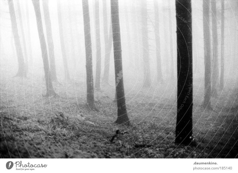 Nature Old White Tree Black Loneliness Forest Life Dark Emotions Think Landscape Moody Fear Fog Earth