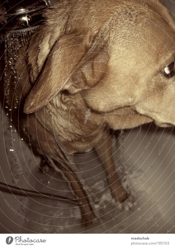 Dog Animal Cool (slang) Clean Bathroom Pelt Bathtub Animal face Trust Brave Passion Freeze Wash Willpower Pet Paw