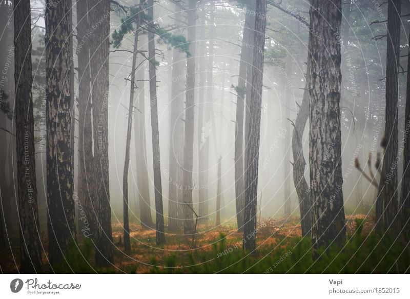 Mystery misty forest Nature Plant Summer Green White Tree Landscape Dark Forest Black Environment Yellow Spring Autumn Natural Grass