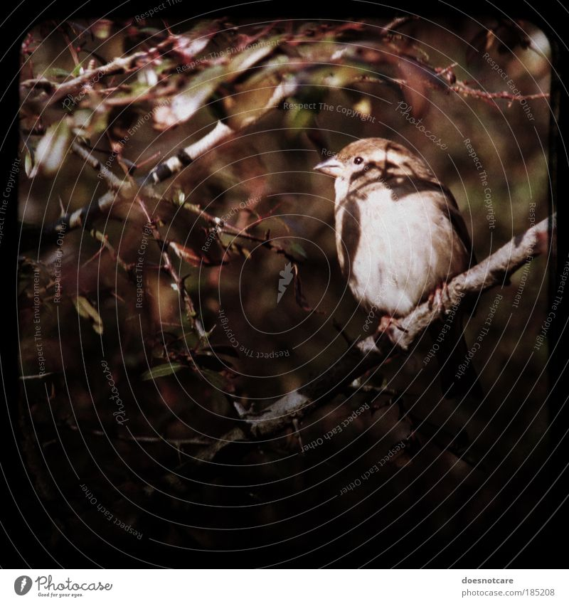 jack. Animal Sit Sparrow Passerine bird Frame Camera tossing Bird Small Brown Autumn Looking Cute Analog internships Bushes Colour photo Subdued colour