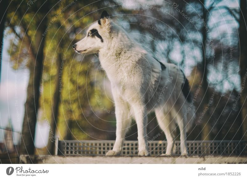 Laika Lifestyle Elegant Style Environment Nature Autumn Beautiful weather Park Animal Pet Dog laika 1 Observe Discover Esthetic Athletic Authentic Threat