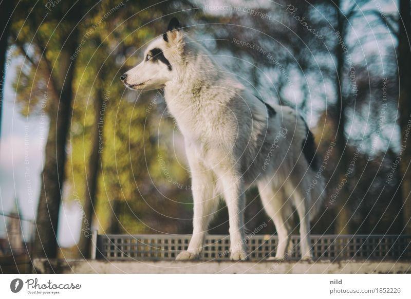 Nature Dog Beautiful White Animal Environment Lifestyle Autumn Style Park Elegant Esthetic Authentic Beautiful weather Observe Threat