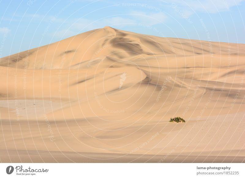 Resistant Vacation & Travel Trip Adventure Far-off places Safari Expedition Sand Warmth Drought Bushes Foliage plant Desert Namib desert Dune Swakopmund Namibia