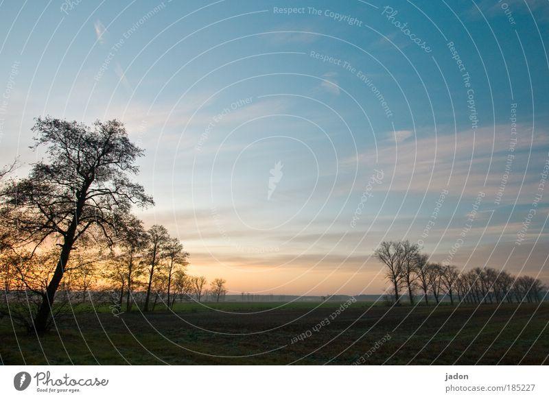 Beautiful Sky Tree Plant Calm Loneliness Autumn Sadness Landscape Contentment Moody Field Horizon Growth Break Romance