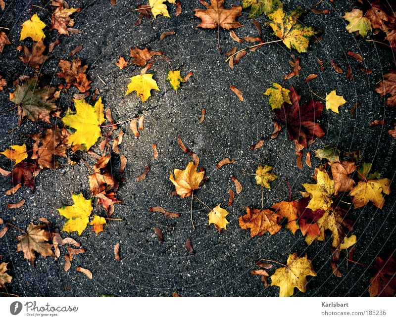 Nature Tree Leaf Relaxation Street Autumn Playing Environment Movement Lanes & trails Park Power Wind Trip Design Lifestyle