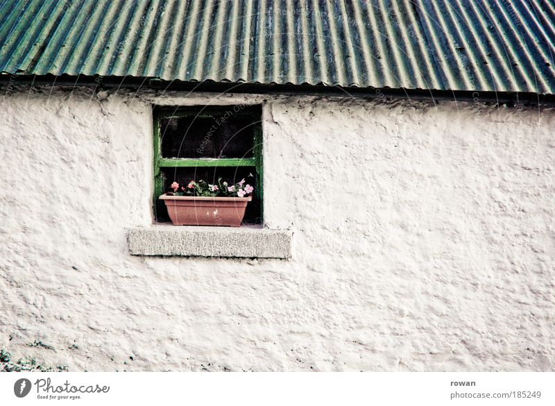 White Flower Green House (Residential Structure) Wall (building) Window Wall (barrier) Building Architecture Small Facade Roof Decoration Farm Idyll