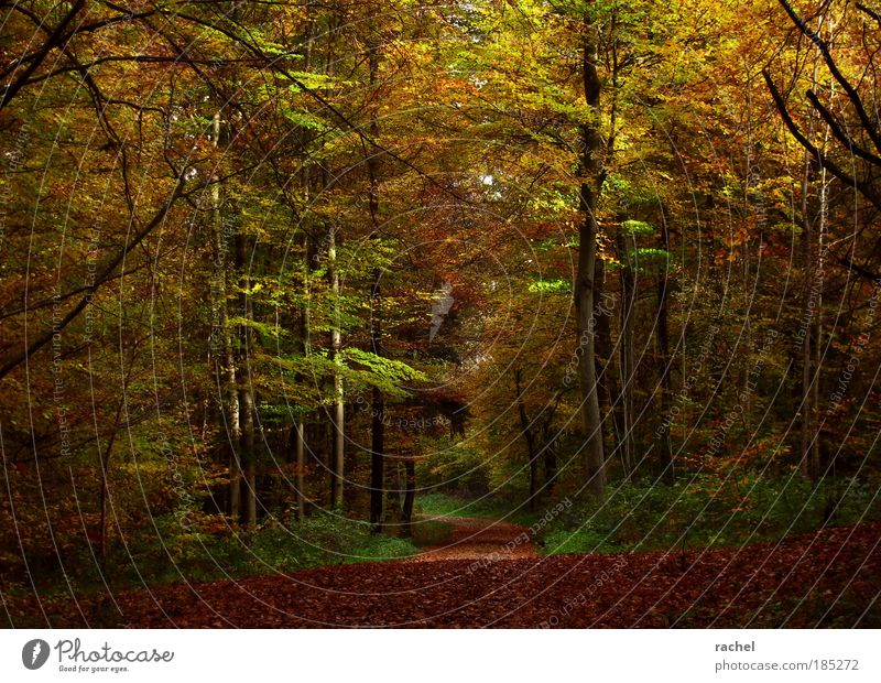 Nature Tree Plant Calm Leaf Forest Autumn Wood Dream Lanes & trails Environment Bushes To go for a walk Mysterious Seasons Footpath