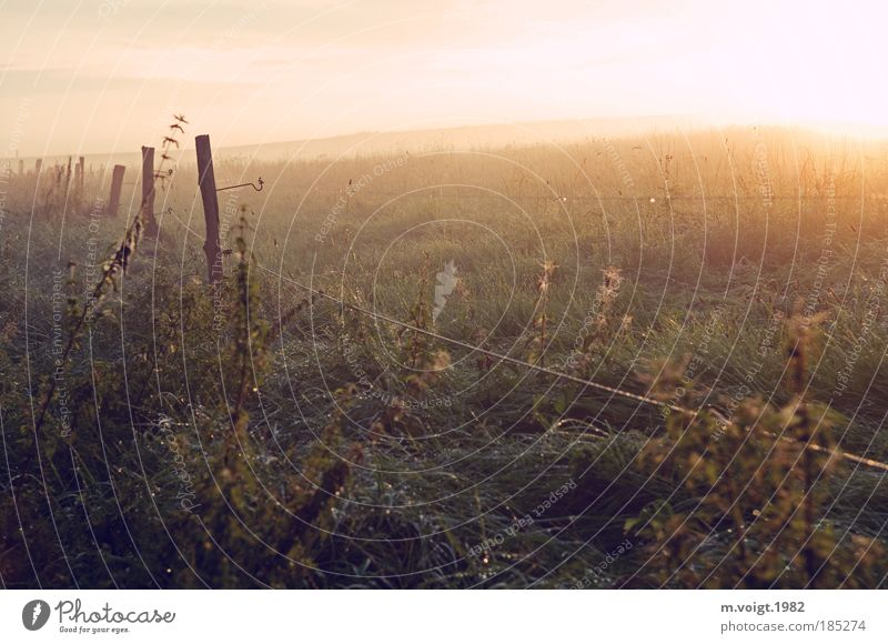 In the morning - No.100 Nature Sun Summer Beautiful weather Meadow Field Positive Freedom Idyll Climate Environment Far-off places Morning Dew Stinging nettle