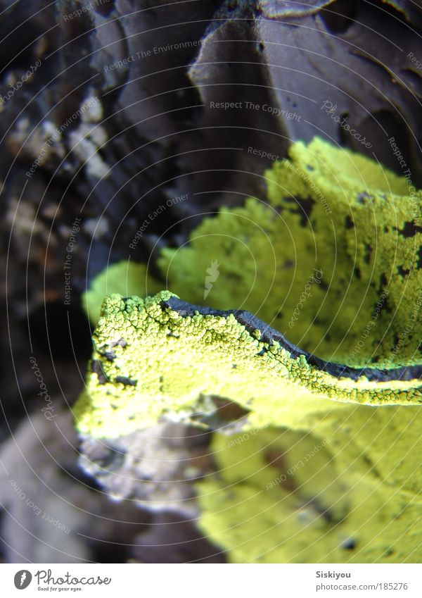 Yellow Stone Earth Esthetic Desert Moss Canyon Volcano Mountain