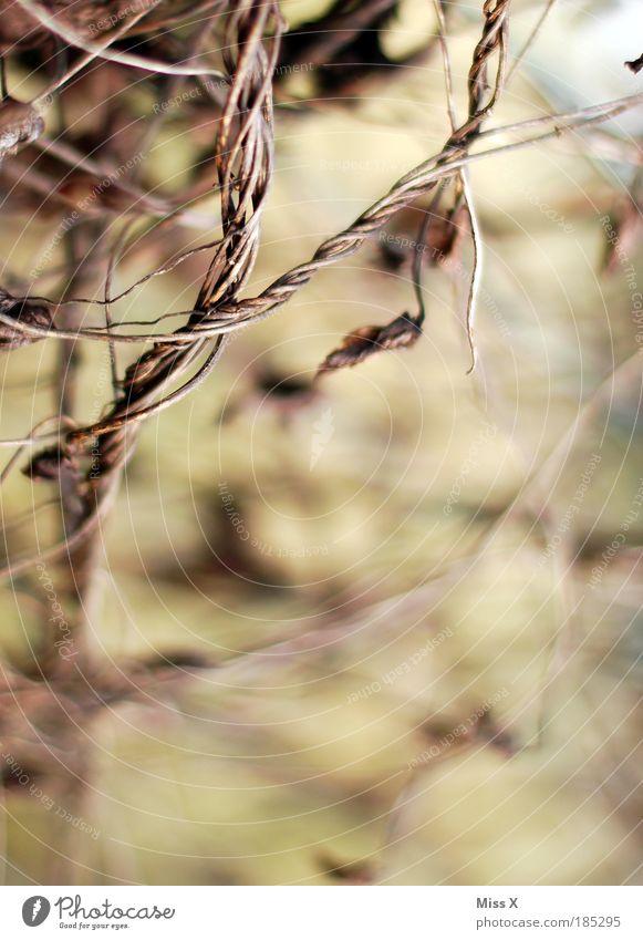 Nature Old Plant Leaf Dark Death Autumn Grass Dream Park Brown Moody Field Wild Broken Bushes