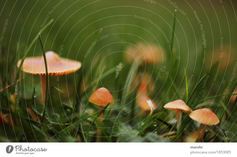 Nature Plant Winter Autumn Meadow Grass Small Garden Moody Climate Mushroom Autumnal