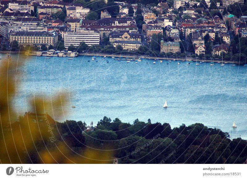 Lake Zurich Cold Tree Leaf Summer Water zürisee Blue Wind