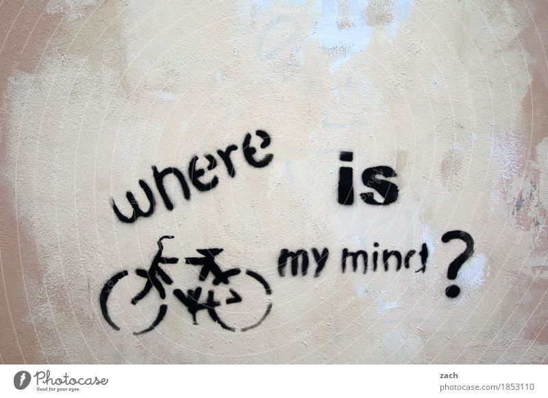 valid question Brain and nervous system Intellect Ask Town Search Bicycle Cycling Downtown Wall (barrier) Wall (building) Facade Sign Characters