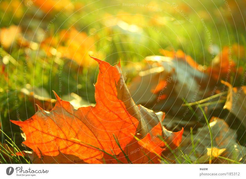 autumn freshness Environment Nature Landscape Plant Autumn Leaf Old To fall Esthetic Gold Emotions Time Autumn leaves Autumnal Seasons Colouring Colour photo