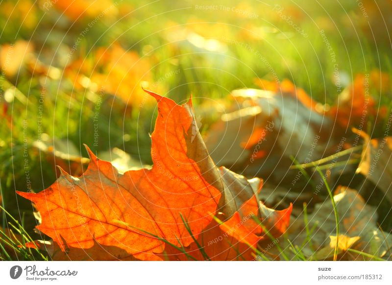 Nature Old Plant Leaf Autumn Emotions Grass Landscape Environment Gold Time Esthetic To fall Seasons Beautiful weather Autumn leaves