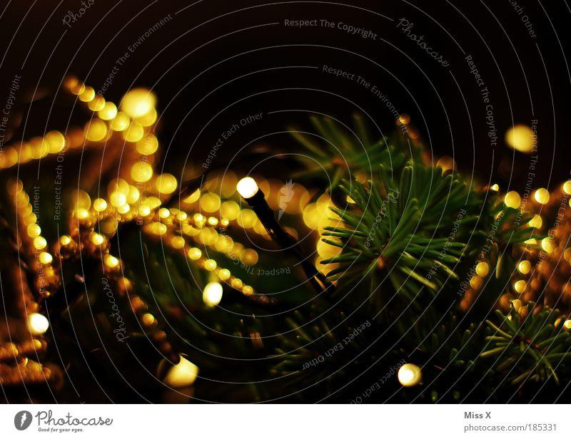 Christmas & Advent Beautiful Tree Joy Leaf Winter Style Warmth Moody Bright Night Feasts & Celebrations Elegant Gold Glittering Decoration