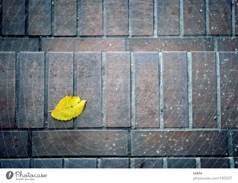 Old Leaf Yellow Dark Autumn Stone Stairs Lie