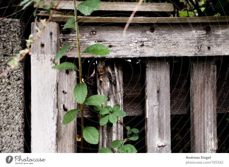 Nature Green Plant Life Dark Wood Gray Stone Environment Concrete Fresh Hope Gloomy Future Bushes Authentic