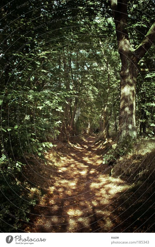 Nature Tree Loneliness Landscape Forest Environment Lanes & trails Natural Growth Beautiful weather To go for a walk Agriculture Footpath Tree trunk Forestry