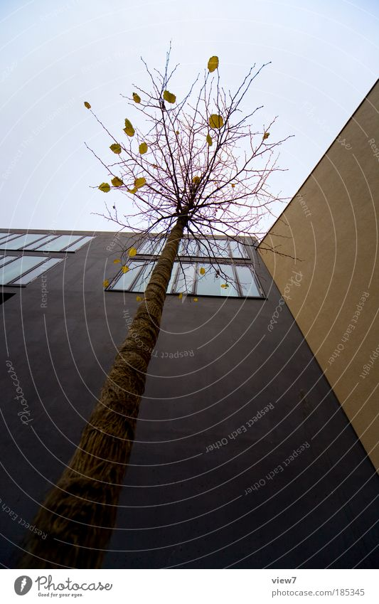 Sky Tree City House (Residential Structure) Clouds Dark Cold Wall (building) Above Window Stone Wall (barrier) Line Brown Power Design
