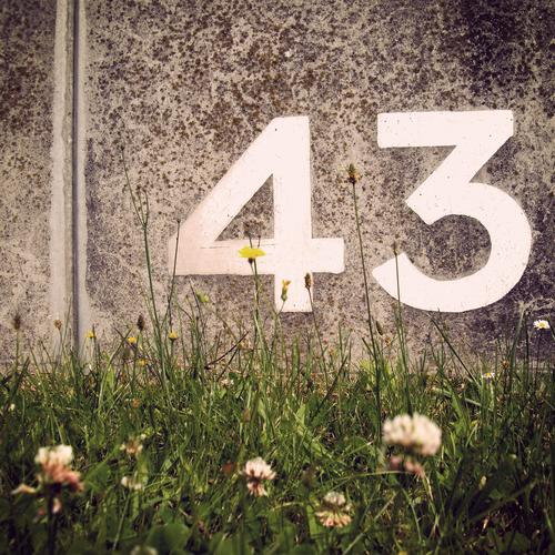technetium Plant Flower Meadow Arrangement Digits and numbers 43 forty-three Wall (barrier) Concrete Stone Inscription Calculation place sb./sth. Meadow flower