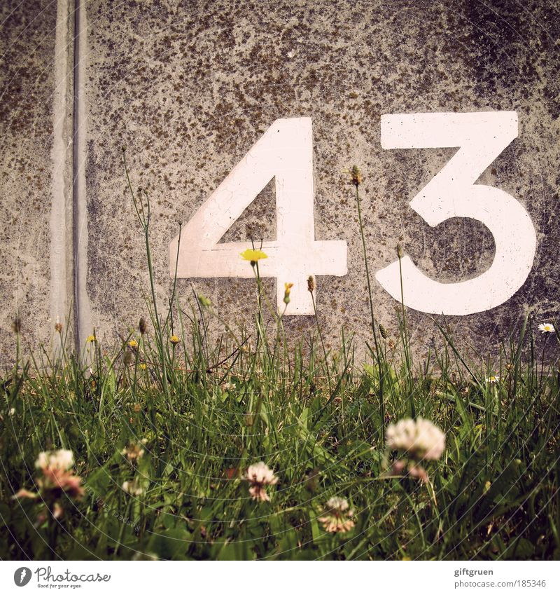White Flower Plant Meadow Grass Stone Wall (barrier) Birthday Concrete Arrangement Digits and numbers Blossoming Furrow Arrange Calculation Jubilee