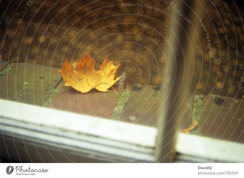 Out in front of the window. Nature Plant Leaf Window Window board Natural Yellow Cold Transience Living or residing Autumn Colour photo Exterior shot Day