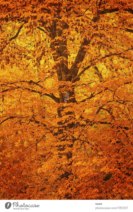 Nature Tree Leaf Environment Autumn Emotions Time Gold Esthetic Seasons Tree trunk Treetop Forest Autumn leaves Autumnal Multicoloured
