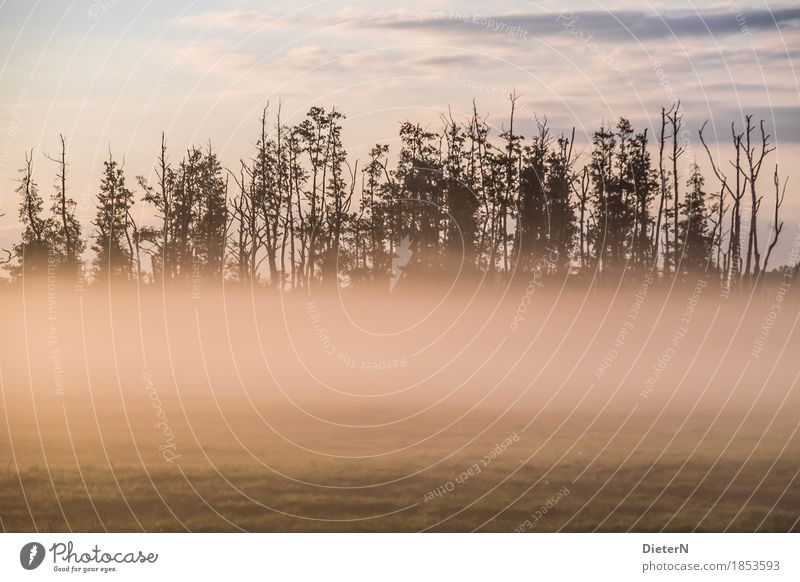 wafts of mist Landscape Earth Autumn Climate Fog Tree Field Green Pink Mecklenburg-Western Pomerania Colour photo Subdued colour Exterior shot Deserted