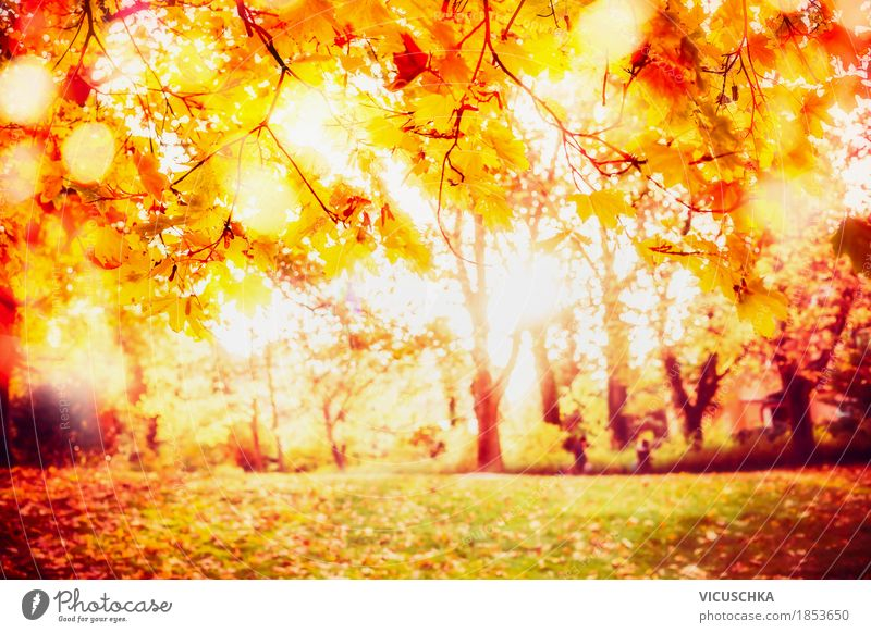 Nature Beautiful Tree Landscape Leaf Yellow Autumn Lifestyle Garden Moody Design Park Bushes Beautiful weather Autumn leaves Autumnal