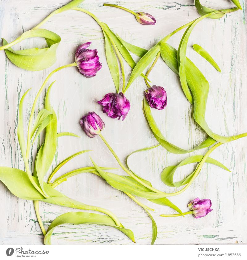 Nature Plant Flower Leaf Blossom Love Spring Style Feasts & Celebrations Design Decoration Elegant Violet Event Still Life Tulip