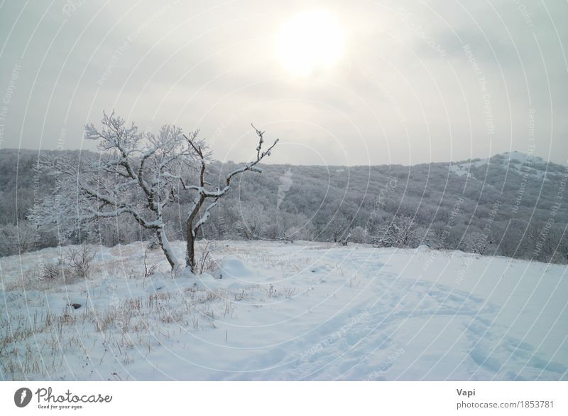 Winter landscape- icy forest Vacation & Travel Tourism Trip Adventure Sun Snow Winter vacation Mountain Christmas & Advent Environment Nature Landscape Sky