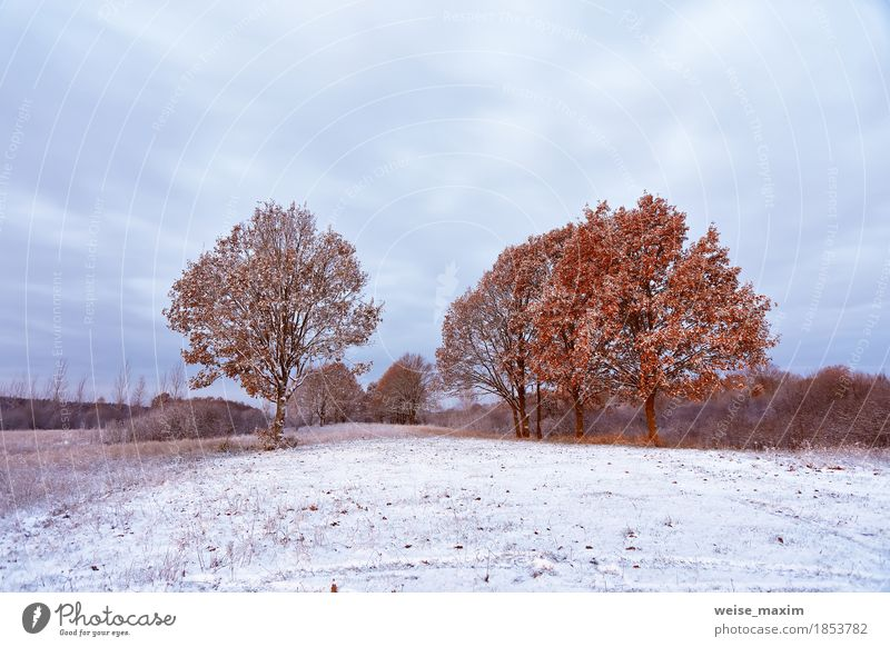 First snow in the autumn forest. Fall colors on the trees Nature Vacation & Travel Plant White Tree Landscape Red Leaf Winter Forest Environment Autumn Natural Grass Snow Freedom