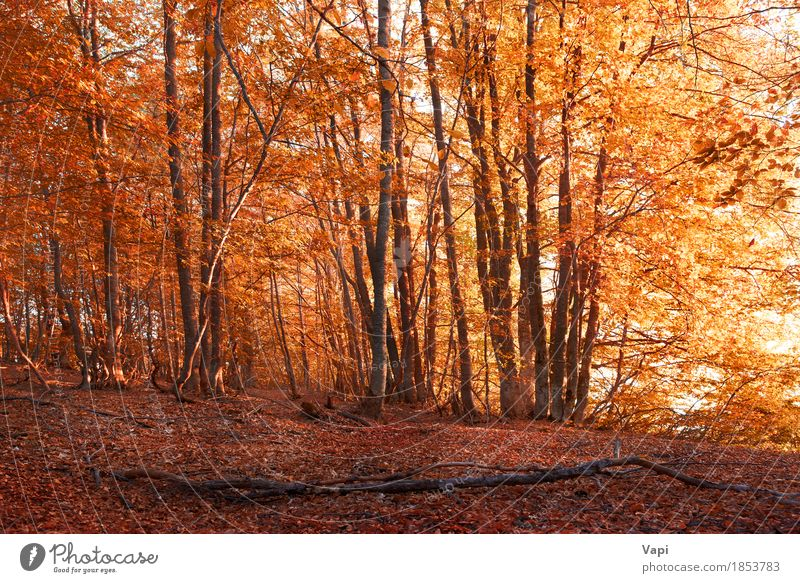 Autumn forest Nature Vacation & Travel Plant Colour White Tree Landscape Red Leaf Forest Environment Yellow Autumn Natural Grass Brown