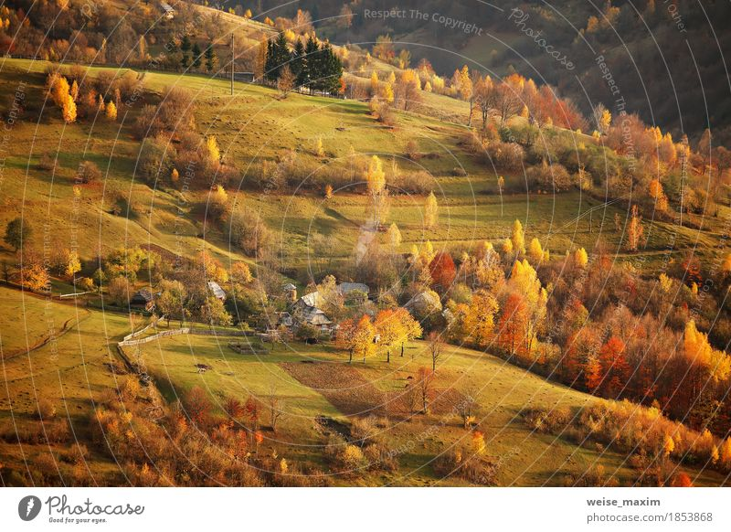 Fall in mountain village. Alpine October scene. Nature Vacation & Travel Plant Green Tree Landscape Red Leaf House (Residential Structure) Far-off places Forest