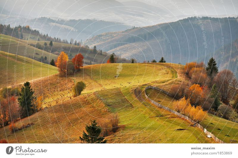 Autumn mountain panorama. October on Carpathian hills Nature Vacation & Travel Green Tree Landscape Red House (Residential Structure) Far-off places Forest Mountain Street Environment Yellow Autumn Meadow Natural