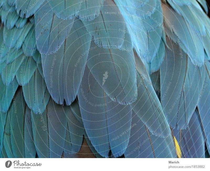 Nature Blue Animal Bird Elegant Wild animal Wing Near Exotic Inspiration Zoo Love of animals