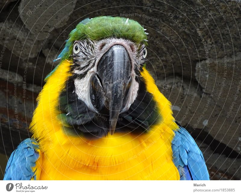 Blue Animal Yellow Bird Friendliness Animal face