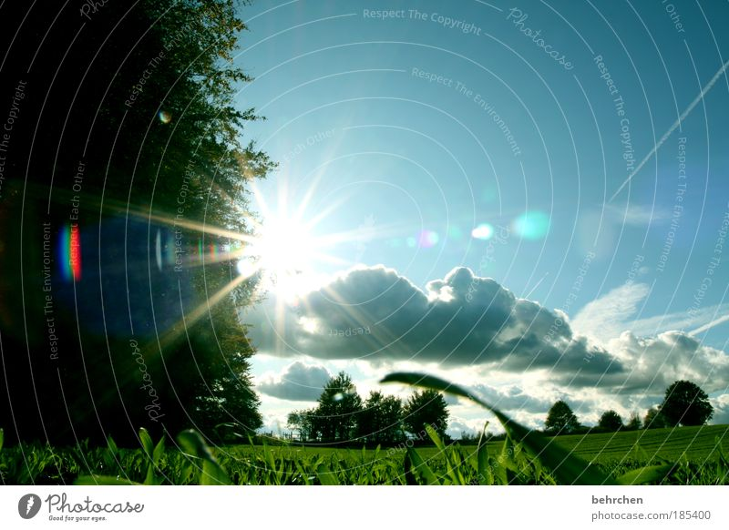 summer(t) Sky Clouds Spring Summer Autumn Beautiful weather Plant Tree Grass Bushes Field Forest Green To go for a walk solar star Growth Vapor trail To enjoy