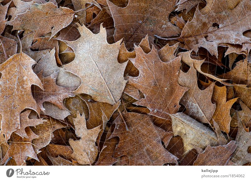 Nature Plant Tree Leaf Animal Winter Environment Autumn Ice Frost To fall Autumn leaves Deciduous tree Oak tree Oak leaf