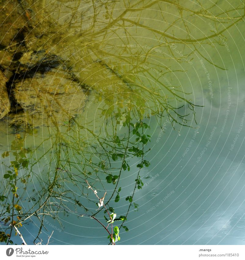 Nature Water Sky Tree Blue Plant Leaf Yellow Colour Autumn Emotions Style Dream River Esthetic Transience
