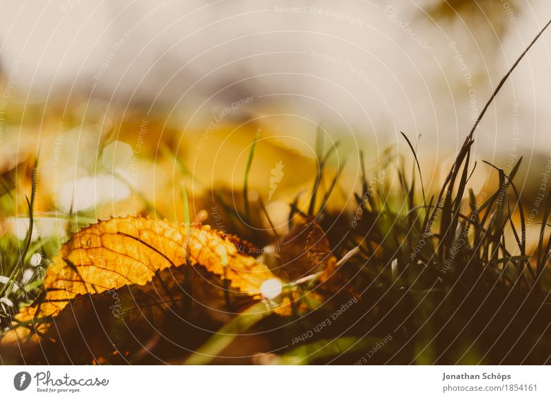Nature Plant Red Leaf Warmth Environment Yellow Sadness Autumn Meadow Grass Garden Brown Park Gold Esthetic