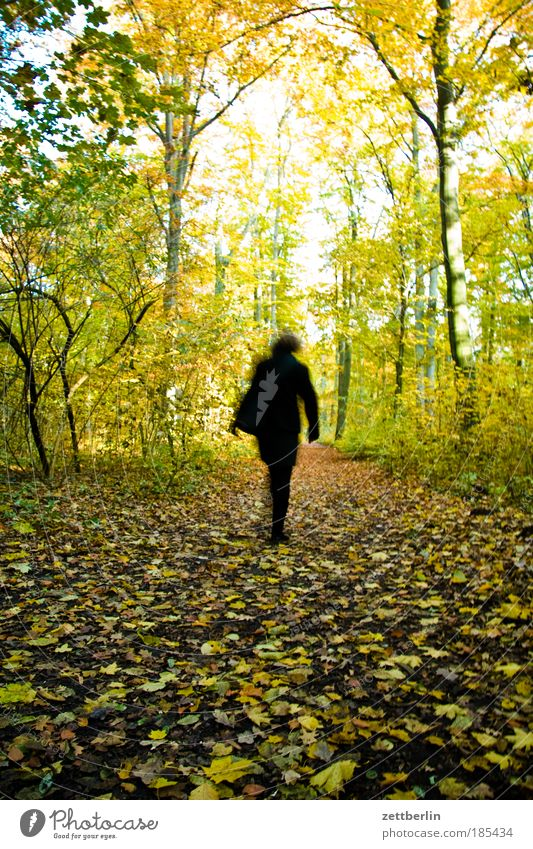 Woman Human being Leaf Forest Autumn Lanes & trails Gold Back Going Walking Hiking Running sports Sidewalk Footpath Seasons