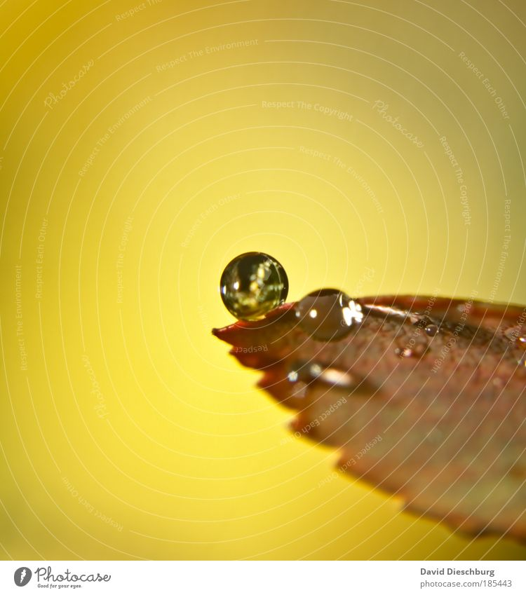 Nature Plant Leaf Environment Yellow Autumn Natural Brown Rain Glittering Multiple Drops of water Climate Circle Round