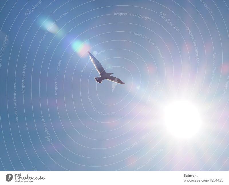 light flight Environment Air Sky Cloudless sky Animal Wild animal Bird 1 Flying Joie de vivre (Vitality) Euphoria Self-confident Optimism Wanderlust Seagull