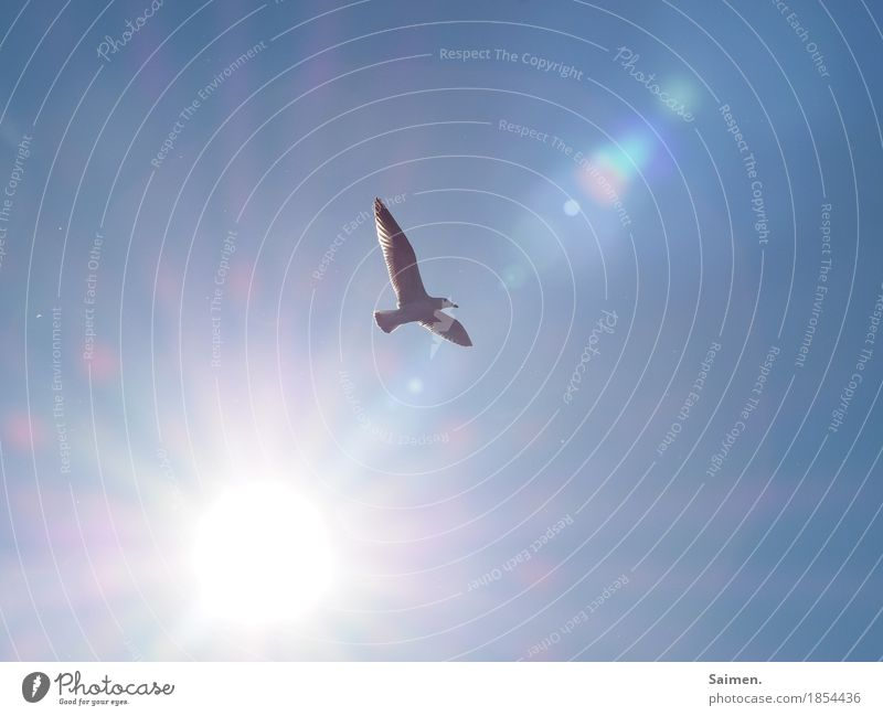 free flight Animal Wild animal Bird Wing 1 Flying Seagull Lens flare Hover Blue sky Freedom Infinite Hope Colour photo Close-up Copy Space left Copy Space right
