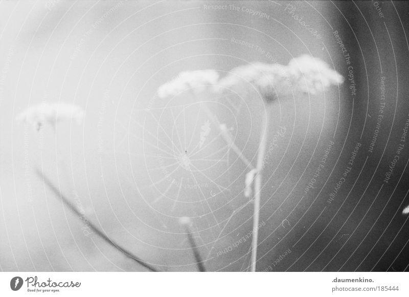 Nature Flower Plant Loneliness Life Dark Autumn Emotions Landscape Moody Fear Fog Empty Esthetic Threat Net