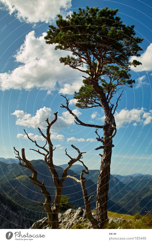 On the Rax Nature Elements Summer Beautiful weather Tree Alps Bright Kitsch Curiosity Joy Happiness Tourism rax Pine Blue sky Clouds Vantage point Colour photo