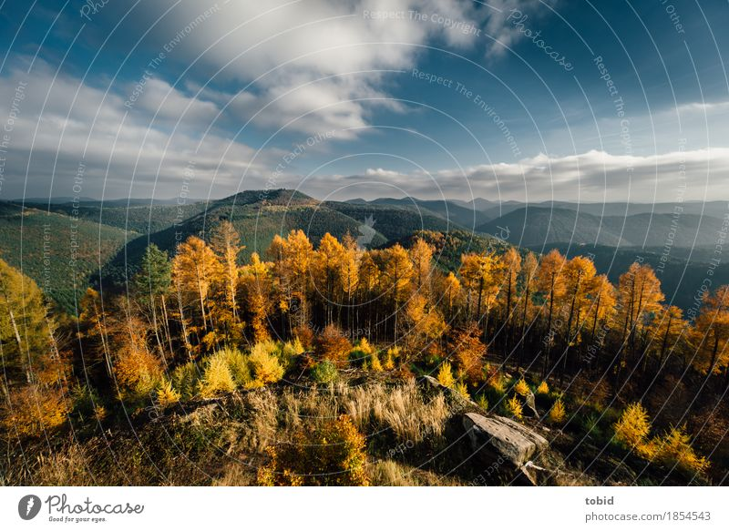 Autumn Nature Landscape Plant Sky Clouds Horizon Sun Beautiful weather Tree Grass Bushes Forest Hill Rock Mountain Infinity Loneliness Uniqueness Idyll